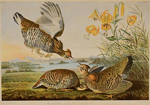 Audubon-low-res_.png